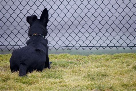 rescue sc img 3070 lucky pup rescue sc
