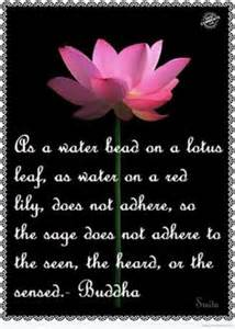 Lotus Poem 1000 Images About For The Of Lotus On