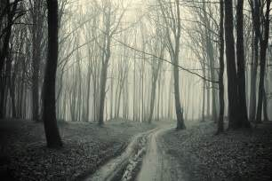 Black and white forest pathway wall mural