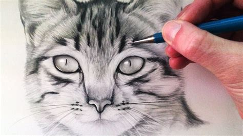 A Drawing Of A Cat by Cat Drawing Realistic Drawing Of Sketch