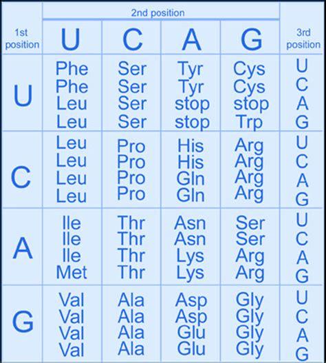 q protein code genome dictionary genetics glossary g