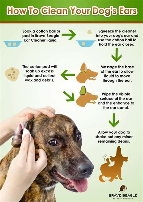 cleaning dogs ears with vinegar 25 best ideas about ear cleaner on cleaning dogs ears ear wash