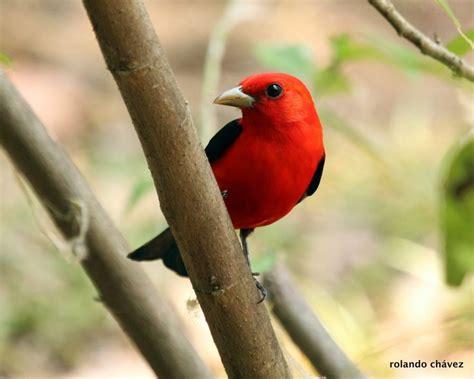 libro las aves exticas mi las 25 mejores ideas sobre aves ex 243 ticas en p 225 jaros bonitos p 225 jaros de colores y
