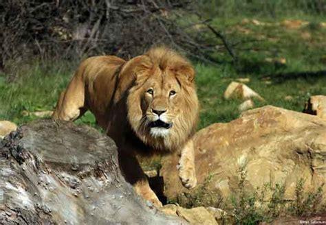 imagenes animales salvajes africa atracciones de kenia safaris y parques naturales