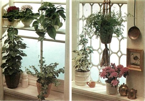 how to arrange indoor plants how to set up houseplant window displays