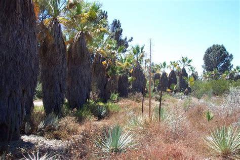 Claremont Botanical Garden Rancho Santa Botanic Garden Letsgoseeit