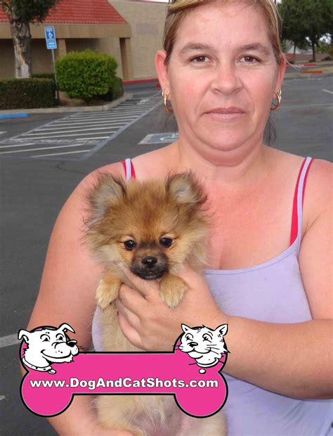 pomeranian coughing and low cost and cat in northern california we met
