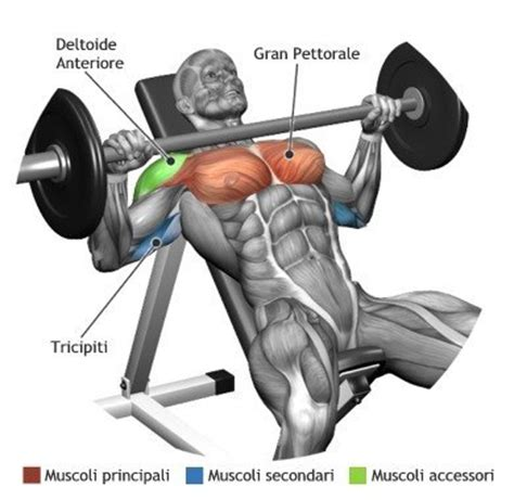 muscles used in incline bench press incline bench press gym workout chart