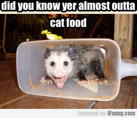 Cat Food Meme - did you know yer almost outta cat food ifunny com