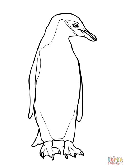 Penguin Clipart Outline by King Penguin Clipart Penguin Outline Pencil And In Color