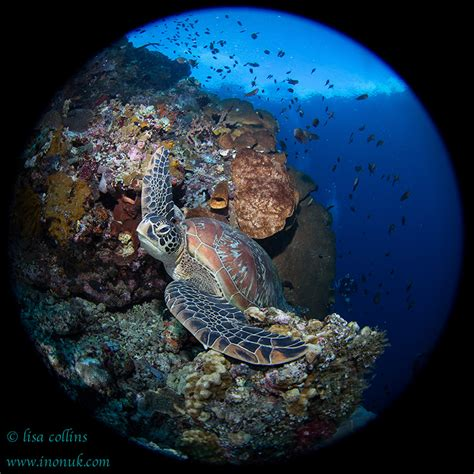 best underwater lensesunderwater photography guide photo essay underwater photography guide