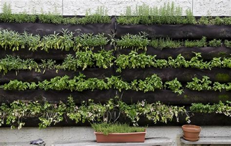 herb wall vertical herb garden nifty homestead