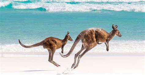 5 Gorgeous Photos To Gawk At by Gawk At These Gorgeous Instagram Of Australia
