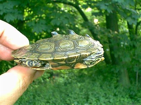 turtles world