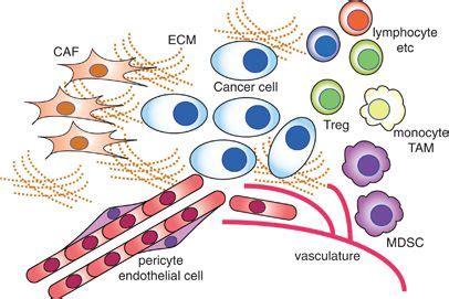 microrna regulons in tumor microenvironment | oncogene