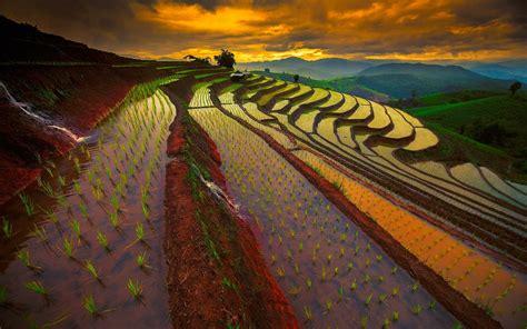 nature landscape sunrise mountain field rice paddy