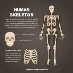 Free Skeleton Templates by Human Skeleton Template Vector Free