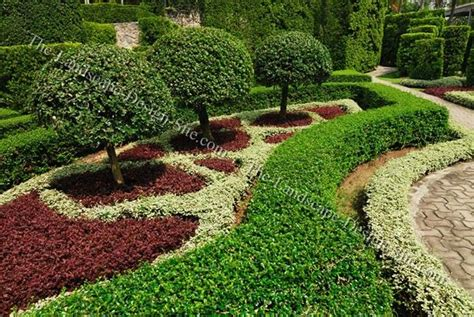 decorative yard plants trees and shrubs for landscaping small ornamental trees