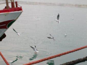 tavole solunari gt gt hobby pesca portale della pesca sportiva pescare in