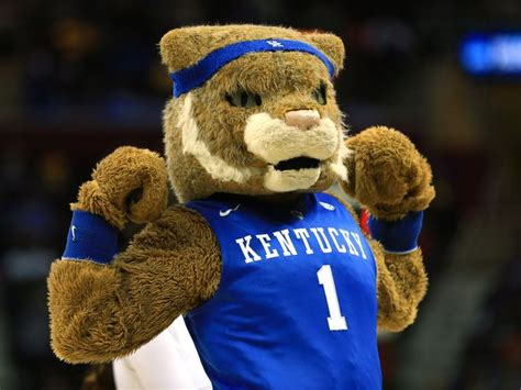 uk wildcats basketball m calling all wildcats student tryouts set for candidates
