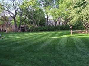 best shade of the grass rhizome idiot proof tips to keep grass growing