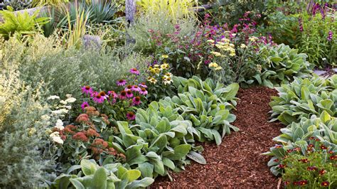 4 easy care flower bed ideas sunset