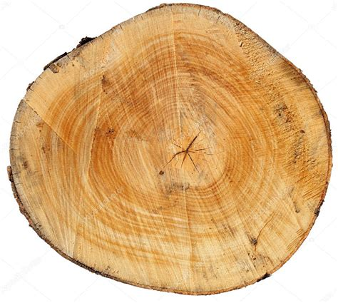 cross section of a tree trunk the trunk stock photo 169 smuki 12142242