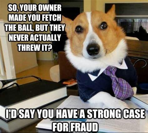 Corgi Lawyer Meme - corgi lawyer corgis that rule pinterest