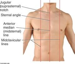 chest wall lungs and flashcards quizlet