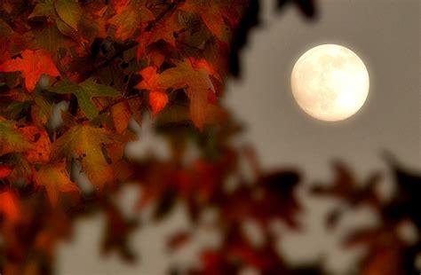 fall moon autumn nature tumblr hd wallpapers msi