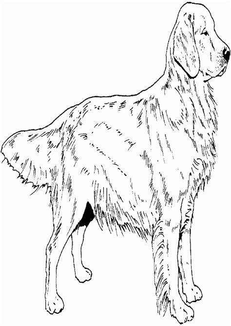 golden spiderman coloring page golden retriever puppy coloring pages printable many