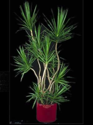 indoor tree low light indoor plants gallery the potted plant scottsdale