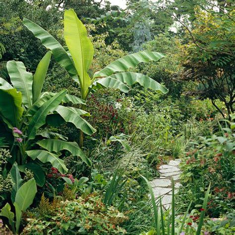 Tropical Gardening Ideas 1000 Images About Tropical Landscape Ideas On Pinterest