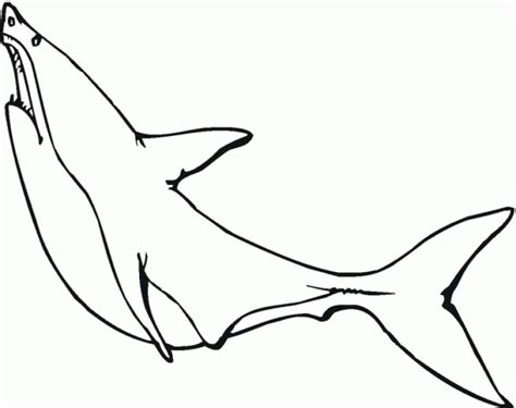 bull shark coloring pages coloring home