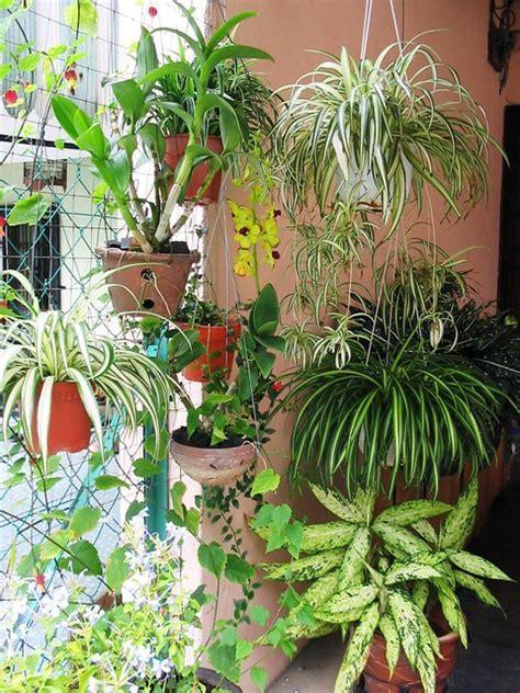 front yard garden  spider plant   flickr