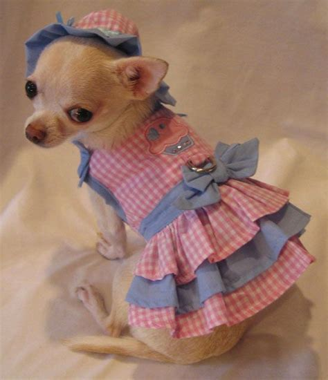 chihuahua puppy clothes best 25 chihuahua clothes ideas on pet clothes buy a kitten and chihuahuas
