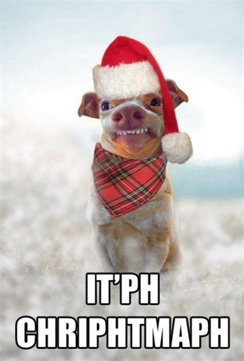 Merry Christmas Funny Meme - itph chriphtmaph phteven tuna the dog know your meme