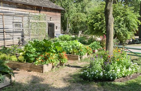 Garden Ideas On A Budget 10 Smart Ways To Garden On A Budget Modern Farmer