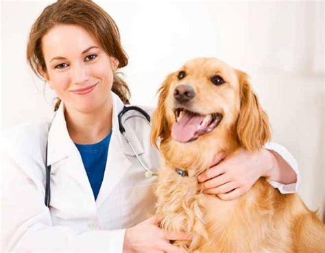 imagenes de medicas veterinarias c 243 mo escoger un buen veterinario conociendo a mi perro