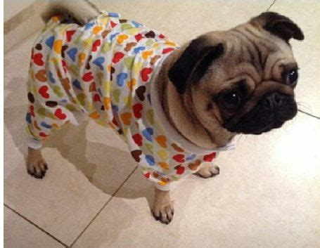 clothing with pugs on them oncey pug clothes made to order