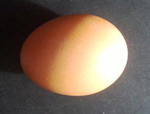 feeding dogs eggs dogs should only eat cooked eggs because of biotin trypsin inhibition