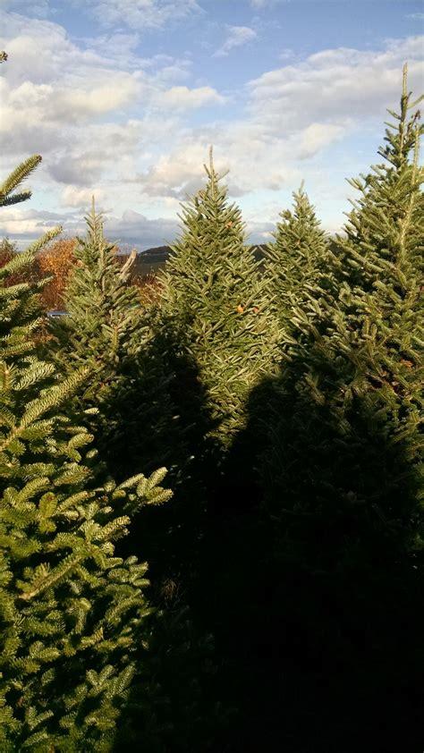 100 pine ridge christmas tree farm 242 best