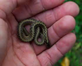 baby garter snake this wasn t in a