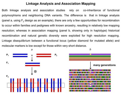 statistical genomics linkage mapping and qtl analysis books figure 1