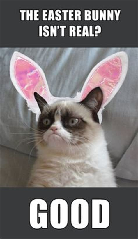 Easter Bunny Meme - 1000 images about bunnies on pinterest rabbit bunny