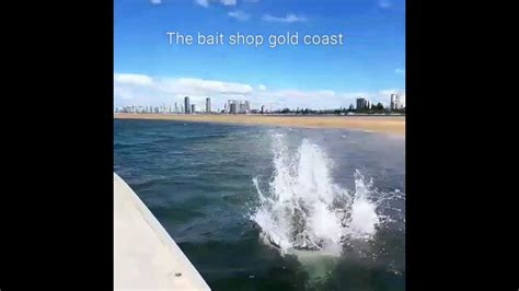 fastest dog in australia cattle dog racing our boat - Fastest Fishing Boat Australia