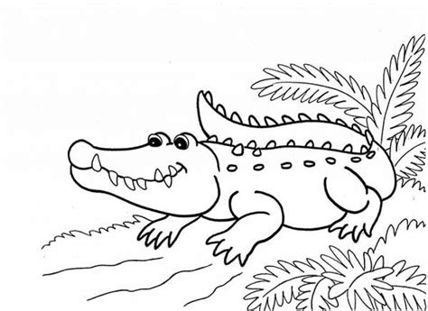 get this printable alligator coloring pages for kids 5prtr