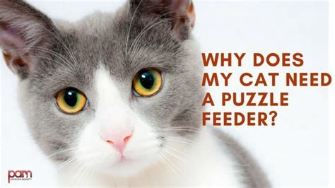 why does my eat cat cat puzzle feeder why your cat needs a puzzle feeder diy