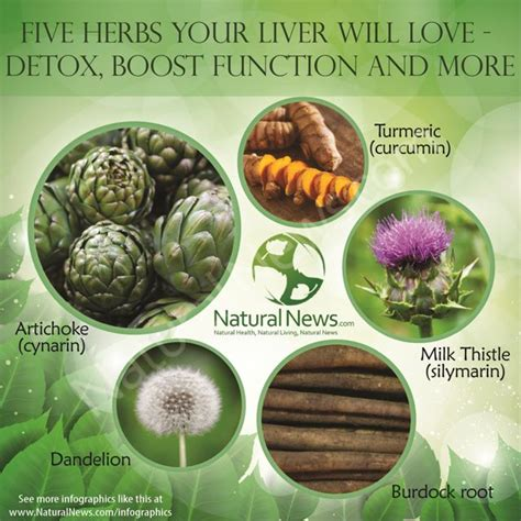 Top 5 Best Liver Detox Herbs by 17 Best Images About Detox And Superfoods On