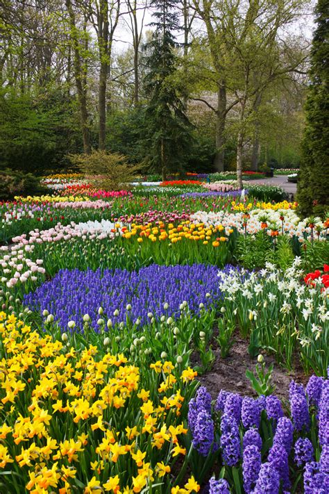 colorful flower garden free stock photo public domain